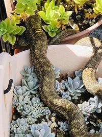 家の植木鉢にこんな蛇がいました。 マムシ似ているような気がして怖いのですが どなたかおわかりになる方お願い致します。