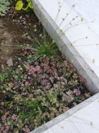 この、逆から見た線香花火みたいな植物の名前は何ですか? 雑草でしょうか? 庭に生えていたので気になりました。