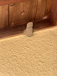 この写真の巣は何の巣か分かる方いますか? 知らぬ間にベランダに出来ていました… また、駆除すべきでしょうか?