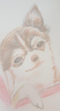 チラシを見て書いた色鉛筆画です。 絵の評価感想よろしくお願いします!うちの子に似ていたもので。。