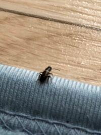 これってゴキブリの赤ちゃんですか?? 最近このサイズの虫がよく湧くのですが、、、