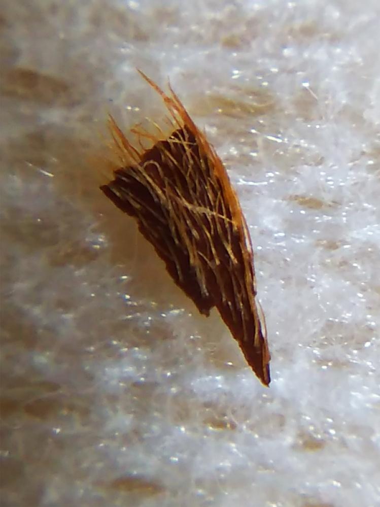 フローリング用ワイパーのクロスにくっついたゴミの拡大写真です。 オレンジの毛に覚えのある方、教えてください。 不思議なことに家で薄っぺらい木の破片のようなものが、しょっちゅう落ちて いるのを見か...
