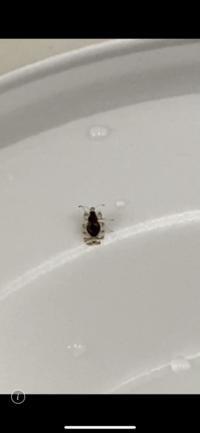 食べ物についてたのですがこの虫なんだかわるかたいらっしゃいませんか?  宜しくお願い致します。