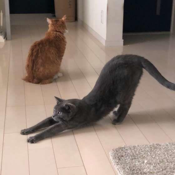 猫のしなやかな身体を おバカな身体と 呼びたくなるのは 私だけでしょうか? (ΦωΦ) (ΦωΦ)