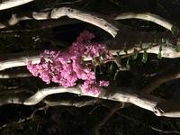 木にピンクの小さい花がたくさん咲いていますが、この花の名前はなんと言うのでしょうか…??