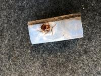 (害虫)この虫はなんですか?    車の中に変な虫の死骸がありました…。 車の中はお菓子の食べかすなど散らかっていてあまり掃除機もかけないため汚いですが、これはダニですか? 2センチくらいあり、カメムシ...
