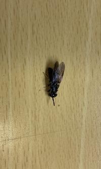 最近、窓の隙間からやウインドエアコンの隙間からこんな虫がちょくちょく入って来ます。 何か対処法はありませんか?