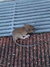 これはネズミでしょうか?