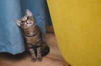 「昔っぽい猫の名前」と言えばどんな名前でしょう? ・ 因みに、我が家で最初に家族に迎えた猫の名前は「ミー助」でした。