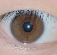 この写真は友達の目なのですが、 この目は茶色ですか? それともヘーゼル色ですか?  僕はヘーゼル色かな?と思うのですが、 僕とその人の他に3人友達がいて、 2人は茶色で、もう1人はヘーゼル色と言っていて、 2...