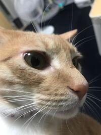 飼い猫の目の上に傷?ができました。 前は小さかったのに気づいたら大きくなってる気がします。 体調には特に変わりないですけど これはなんですかね?