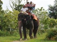 象が家畜になったら可能性は? 象は成長が遅いので野生のものを捕まえて馴化するしかないそうですが、もし大人になるのが牛よりちょっと遅いくらいに早かったら、この体重数トンになる巨大な生き物はどんな用途があ るorあったでしょうか?  象肉がスーパーに並んだでしょうか? 世界的な家畜になったでしょうか? ツッコミどころがいっぱいですがご回答ください。