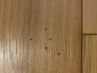 ご回答お願いします。 今年引越したばかりで、新しいアパートで初めての秋なのですが、小さい虫が大量発生しています。 ベージュのカーペットを敷いており、点々とこの虫がいます。どんどんどこからか来てます。 調べても、赤いダニでは無さそうなんです。 この虫が何かわかる方がいたら教えてほしいです。 また、発生を止める方法を教えてほしいです。