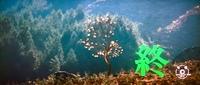 昨日BSプレミアムで放映された、山口百恵の「絶唱」のラストシーンのこの樹は何の樹でしょうか? お分かりになる方いらっしゃいましたら、お教え下さい。宜しくお願いします。