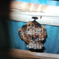 この蜂の名前と駆除方法を教えて下さい。 巣が2段になっています。