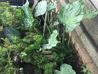 北向きの花壇に勝手に生えてきてすごく大きくなってるんですが、なんの植物でしょうか? ノコギリで切ってしまった方が良いでしょうか?