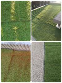 人工芝についてです。 業者に新築の家の庭に人工芝を張ってもらったのですが…… やってもらった当日。継ぎ目が目立ちまくるのと、コンクリートの土間打ちとの隙間が砂地が出ているので簡単に草が生えそうです。あ...