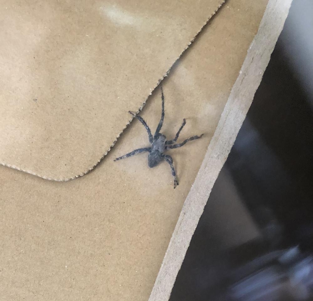 このクモの種類を教えてください アシダカグモでしょうか? 結構触ってしまったのですが弱ってしまいますか?
