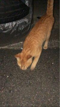 この猫は痩せてますか?また、何歳くらいだと思われますか?わかる範囲で結構です。