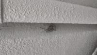 虫の画像あります! すいません少し緊急です。 道端に写真のような蜘蛛がいたんですよ。 で、その画像からgoogle lens で検索かけてみると「ドクイトグモ」っていう特定外来生物って出たんです。 この蜘蛛って本当にドクイトグモですか? もし、そうなら蜘蛛がいる家の人が危険な気が... 回答お願いします!!
