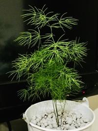 画像の植物の名前を教えてください