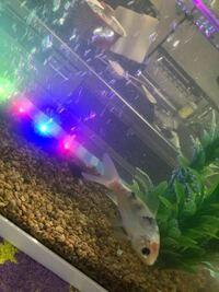 この鯉の種類を教えて下さい! あと餌を全然食べないんですけど何でなんでしょうか?