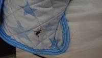 この虫なんたて虫か分かる人いますか?