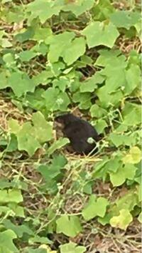 土手に謎の動物がいたのですが、この動物はなんでしょうか? 草を食べてました。