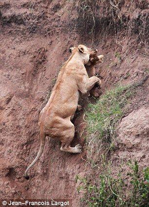 トランプが、絶体絶命のピンチから復活してきています。 正に谷底から這い上がってきたライオンのようです。 この感動をクラシック音楽で表現力すると、どんな曲になるでしょうか。 しかしインテリが多...