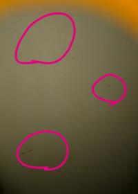 漆喰について教えて下さい。お願い致します。漆喰を業者さんにお願い致しました。 漆喰の中にゴミみたいなものが見えるのですがゴミでしょうか?長く黒い物や黒い点が入っています。ゴミではなく繊維ですか?黒い...