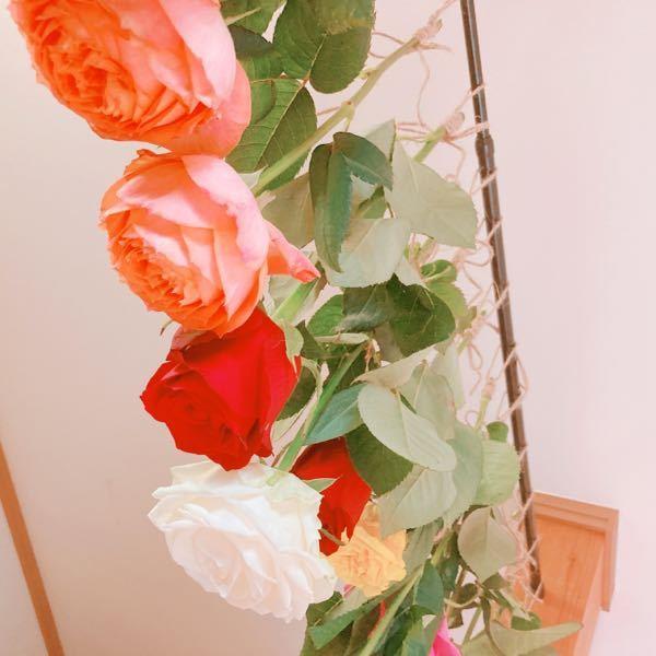 ドライフラワーを吊るして作る際、吊るした時の花の間隔は近くてもうまくドライフラワーになってくれますか? 作る場所が狭くバラでドライフラワーを作りたいのですが隣の花との間隔がとても近いです。 それ...