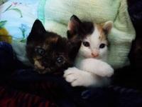 三毛猫の雄が産まれました。 高額で売りたいんですが どこで買い取ってくれますか?
