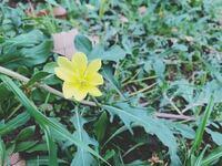 この花の名前わかりますか?葉っぱはたんぽぽに似ているような気がします。