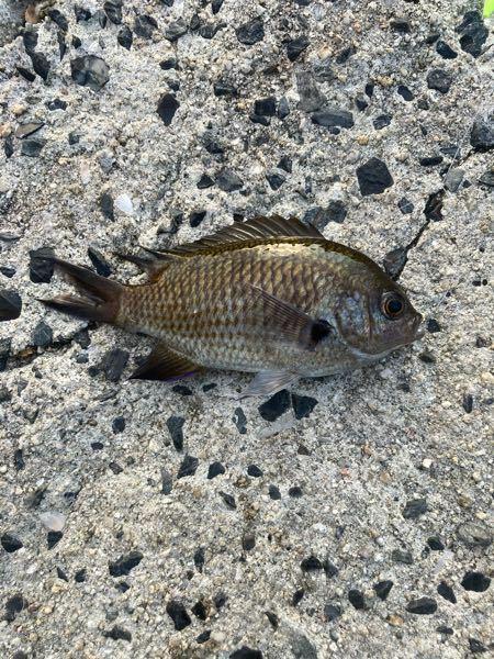 この魚はなんですか? 食べたら美味しいですか? オススメの食べ方有れば教えてください。