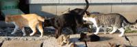 猫のおしりの臭いは、人間の聴診器よりも精度が高いですか?