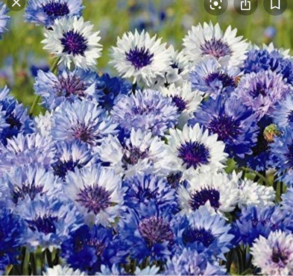 これはなんと言う名前の花ですか?
