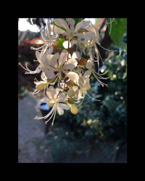 この植物の名前を教えてください。 よろしくお願いします。