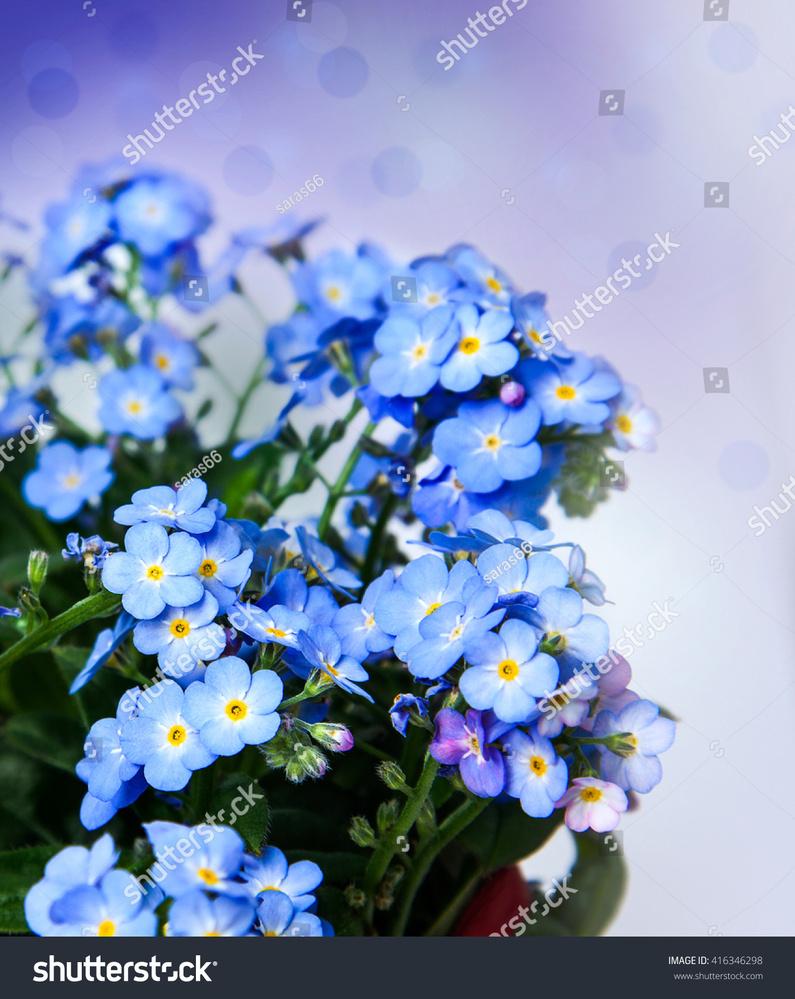 花の名前がわかりません。 写真の花はなんという名前のお花でしょうか?