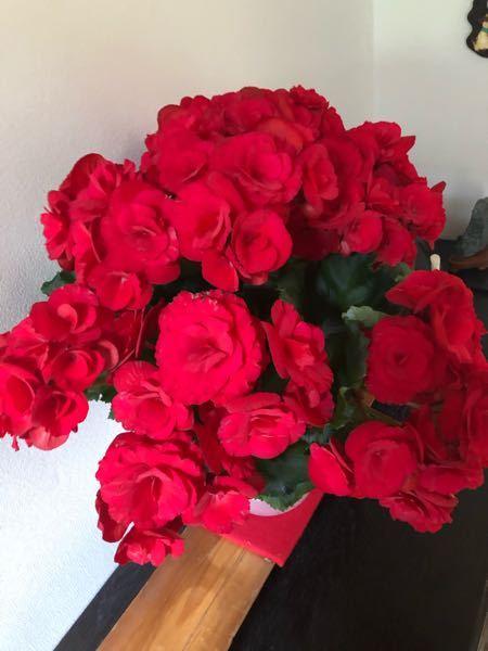この花の名前を教えてください! 知人が花屋さんで購入したそうなのですが名前を聞いても分からず名札もないためわかりません。 ネットで探しても見つけれなかったのでお願いします!