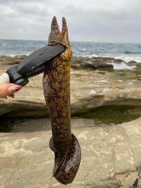 釣り人、魚に詳しい方に質問です! この魚はなんでしょう…?海で釣れました 食べられるんですかね…?