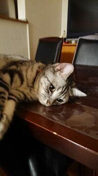 タメと申します。 家の猫ちゃん(コロ)が先日くなりました。 ピアノを弾いてあげたいと思います。 何の曲が良いですか? 元気な頃のコロです。
