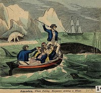 いつ頃から欧米人にとって鯨は特別になったのですか? 鯨油をたくさん採っていましたが。 現代社会では欧米を中心に捕鯨には反対する国家が増えましたよね、グリーンピースやシーシェパードなどのように、捕鯨国に対して時に過激な抗議に出る団体もあるようです。  ただ、19世紀ではアメリカなども鯨を狩ることで、鯨油をたくさん採っていましたよね。 他にも巨大で狂暴な鯨と戦う「白鯨」という小説がベストセラーに...