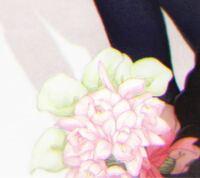 この花(白とピンクの花両方)の名前が知りたいです。