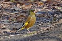この野鳥の名前をご存知の方、教えて下さい。