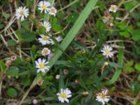 この野草の名前教えて下さい。