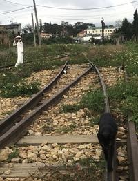 この黒猫は列車が来たら、ちゃんと逃げてくれるでしょうか。