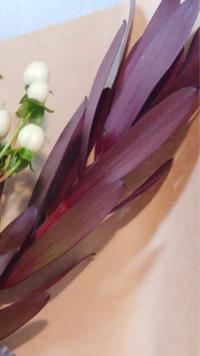 こちらの赤茶色?赤紫色の葉っぱの名前が分かりません。 何という名前でしょうか。