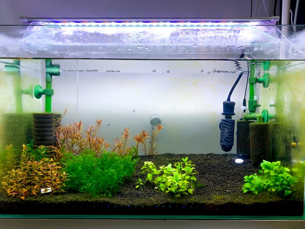 60cm水槽にベルベットブルーシュリンプとブルーグラスグッピーを繁殖させる水槽を立ち上げ中なのですが、 そこにコリドラスアエネウス アルビノも混泳させて、3種類とも繁殖させるのは難しいのでしょ...