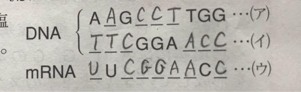 DNAの塩基配列とDNAの一方の鎖の塩基配列を写し取ったmRNAの塩基配列なのですが、なぜこうなるのでしょうか?