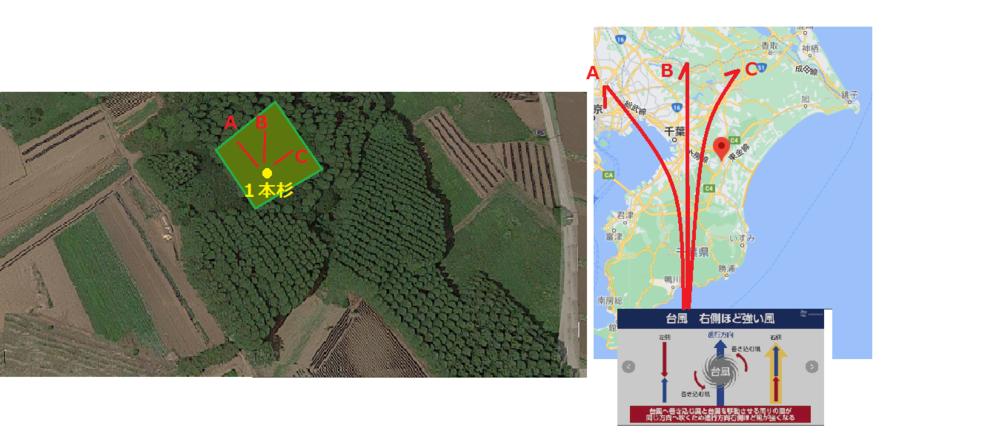 台風の進路と1本杉の倒れる方向について 一般的に台風が目標地点の左側に進路を取った場合には目標地点の右側の被害が大きいと理解しています。 仮に、 右図の様に台風の進路が3通りのA.B.Cになっ...